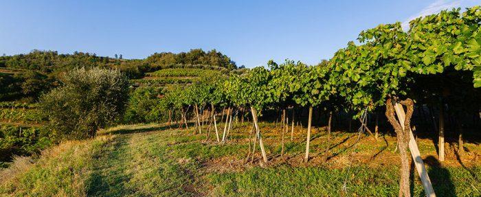 Rượu vang SOAVE Tenuta Di Corte Giacobbe