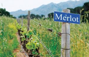 Merlot 1